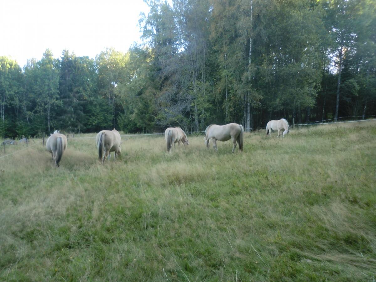 Det börjar bli höst i hästarnas sommarhage