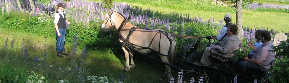 Grönturens Fjordhästar