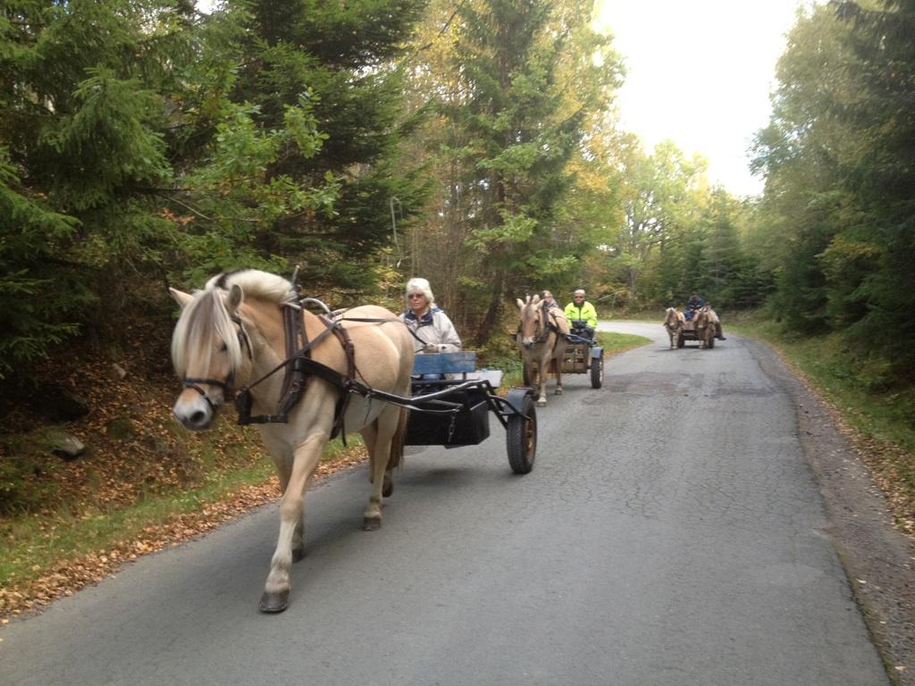Hösthästkörning 2013